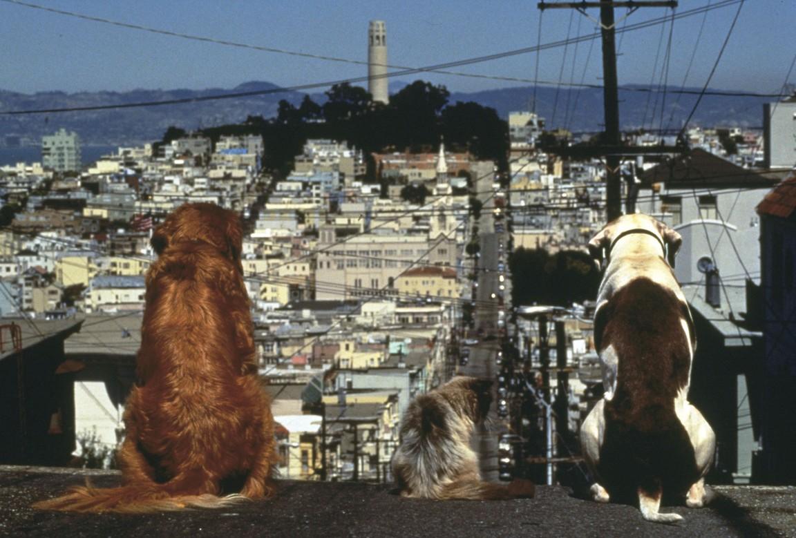 Homeward Bound 2: Lost in San Francisco
