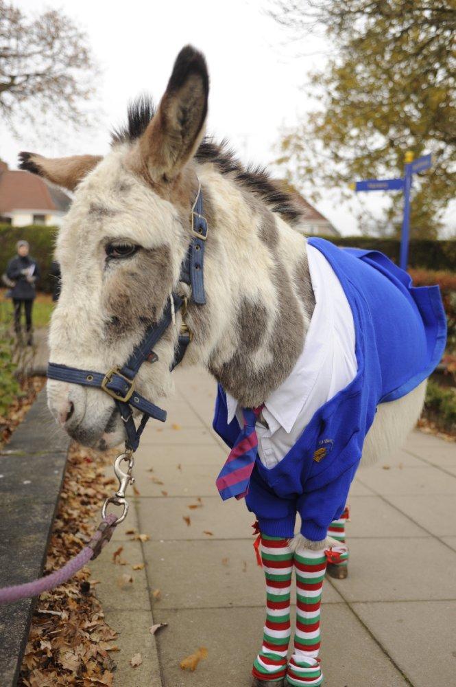 Nativity 3: Dude, Where's My Donkey?!