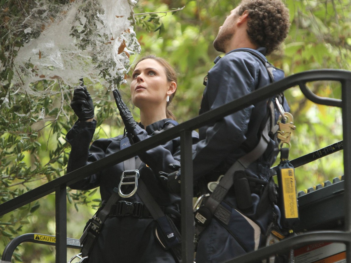 Bones - Season 8 Episode 11: The Archeologist in the Cocoon